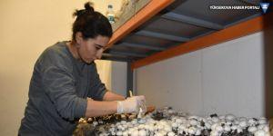 Şırnaklı girişimci iki ev kadını kültür mantarı üretiyor