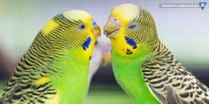 Van Cezaevi'nde dişi kuşa yasak... Gerekçe: Çiftleşebilirler
