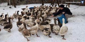 Kar yiyen kazlar, kesilerek satışa sunuluyor