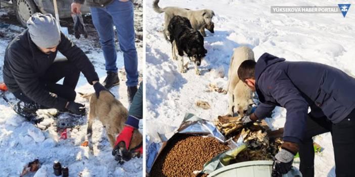 Yüksekova Belediyesi: Köpek ölümlerinin nedeni gençlik hastalığı