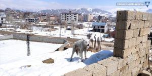 Yüksekova'da inşaatta mahsur kalan 2 köpeği belediye ekipleri kurtardı