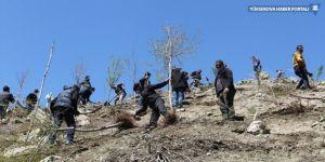 Hakkari'de ağaçlandırma çalışması