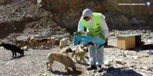 Şemdinli'de hayvan barınakları dezenfekte edildi