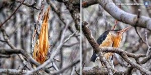 Nesli tükenmek üzere olan kuş Yüksekova'da görüntülendi