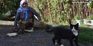 """Hastalığına rağmen sahiplendiği kedilere """"anne şefkatiyle"""" bakıyor"""