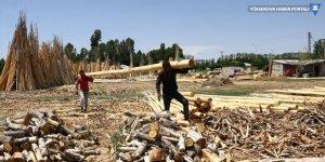 Kesilen ağaçların kabuklarını soyarak ailelerini geçindiriyorlar