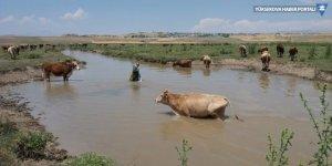 Çaldıran'da sel nedeniyle tarım arazileri hasar gördü