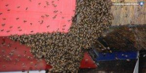 Hakkari'de iş yerinin tabelasına konan arılar esnafa zor anlar yaşattı