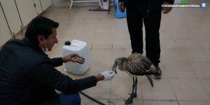 Şemdinli'de yaralı flamingo tedaviye alındı