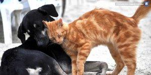 10 yıldır tartışılan Hayvan Hakları Yasası yeniden güncellendi