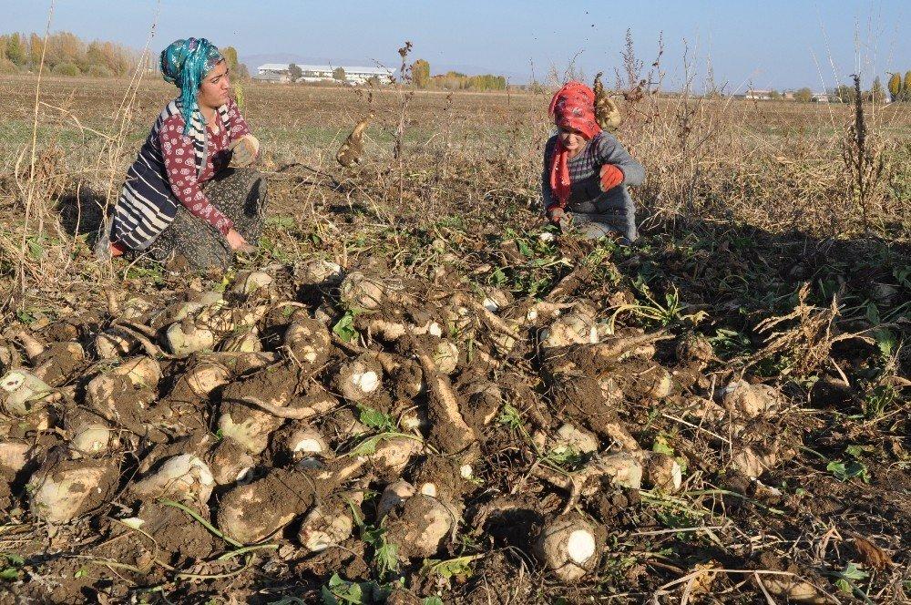 Sağanak yağış çiftçinin işini zorlaştırdı