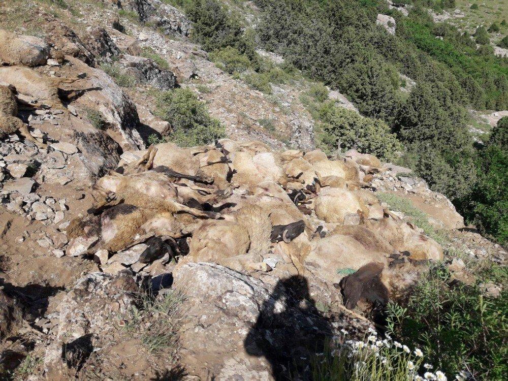 Uçurumdan atlayan 300 koyundan 200'ü telef oldu