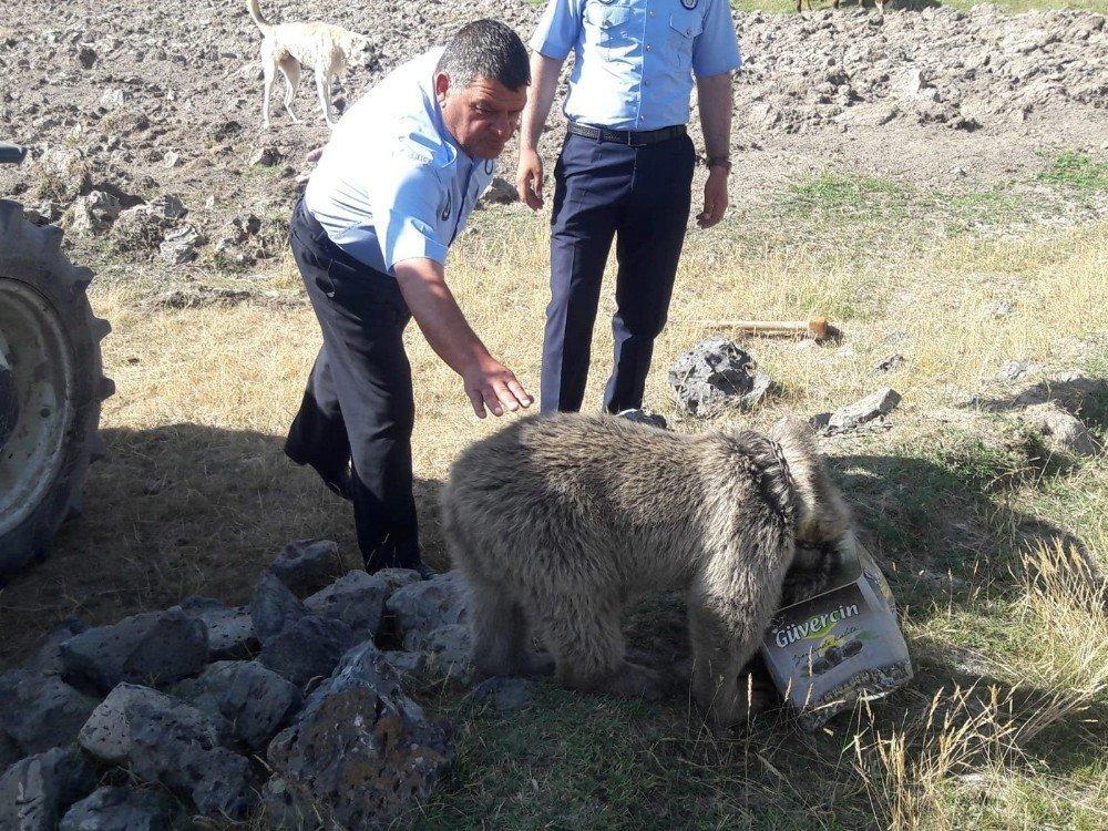 Van'da yiyecek arayan yavru ayının kafası tenekeye sıkıştı