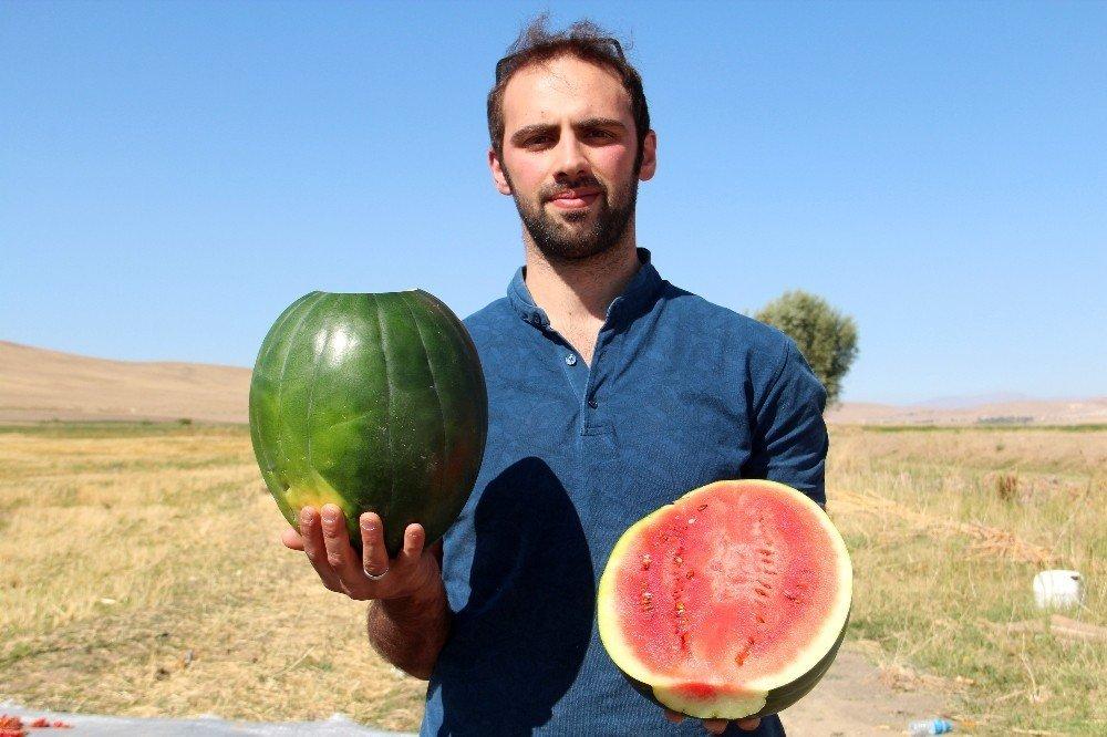Van'da doğal yollarla ıslah edilen yerli tohumlar ürün verdi
