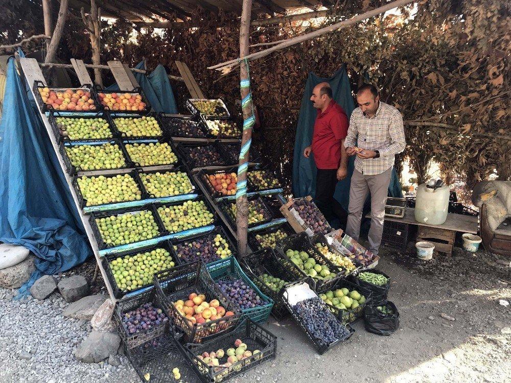 Bitlis ekonomisine incir ve nar desteği