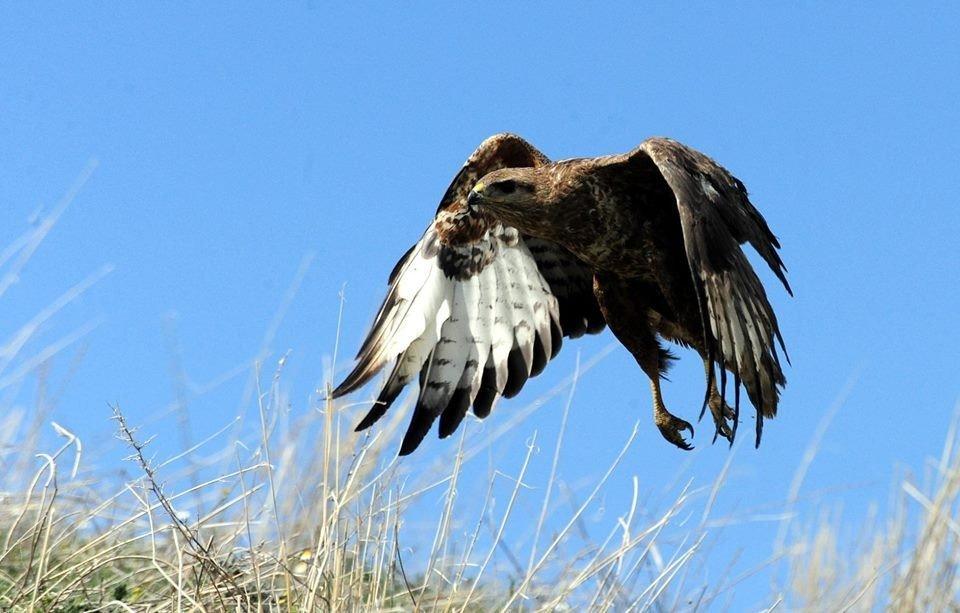 Van'da tedavileri tamamlanan 39 değişik tür kuş yaşam alanlarına bırakıldı