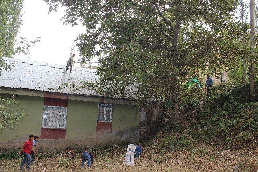 Uludere'de ceviz hasadı başladı
