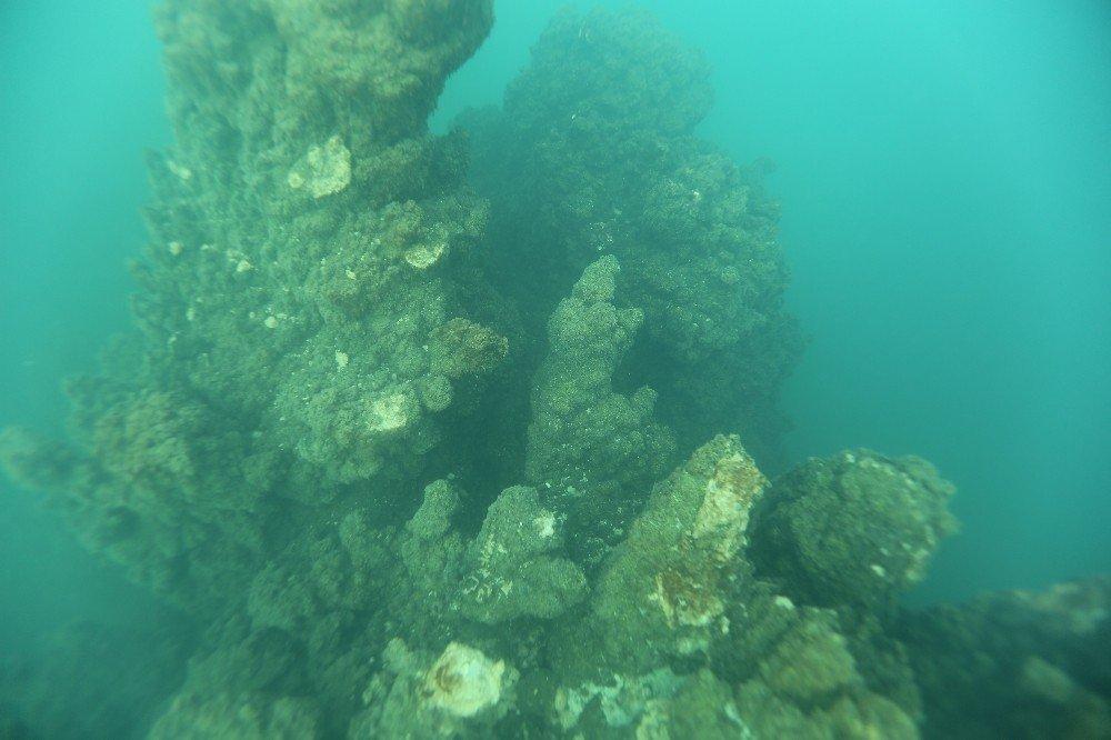 Van Gölü'nde bulunan balığın türü tespit ediliyor