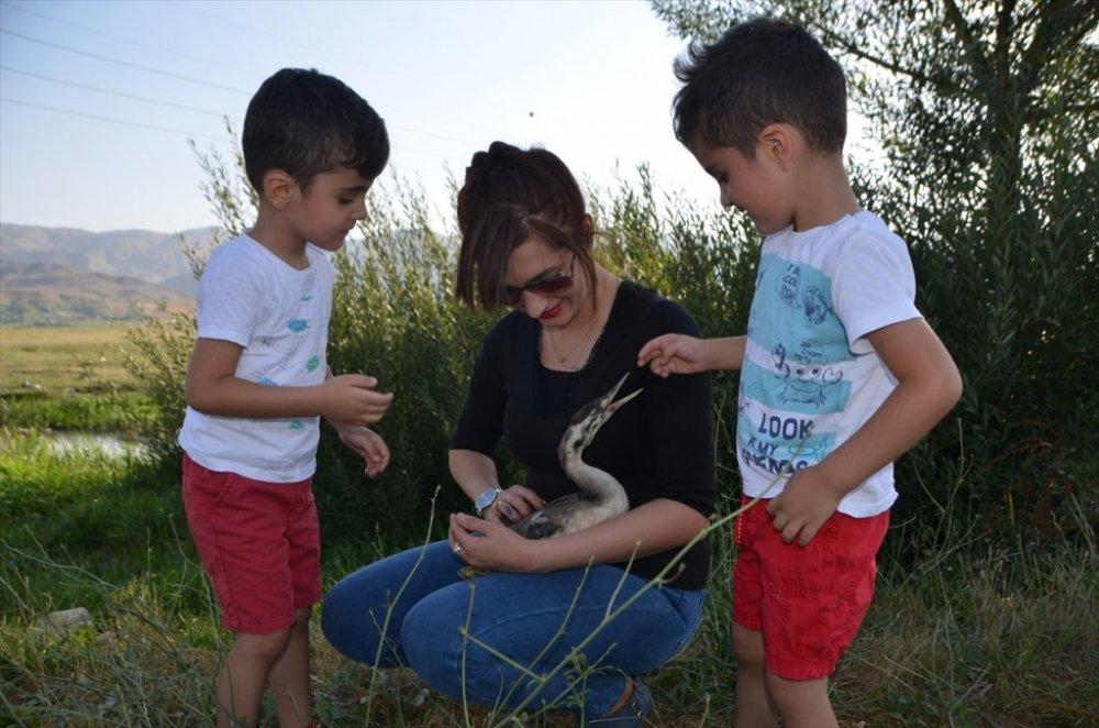 Yüksekova'da tedavisi tamamlanan balıkçıl kuşu doğaya salındı