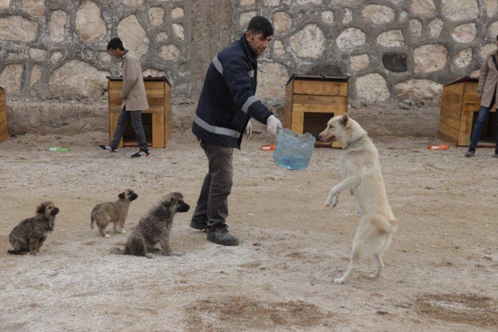 Van'da öğrenciler sokaktaki köpekler için kulübe yaptı