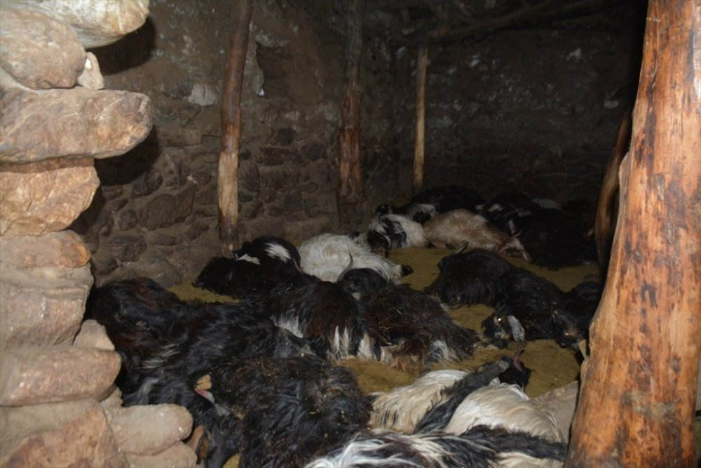 Ahırda unutulan mum nedeniyle çıkan yangında 70 hayvan telef oldu