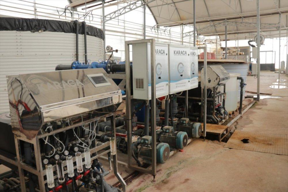Van'da eksi 46 dereceye rağmen jeotermal serada salkım domates yetiştiriliyor