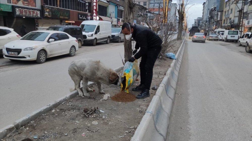 Yüksekova Belediyesi sokak hayvanları için mama bıraktı