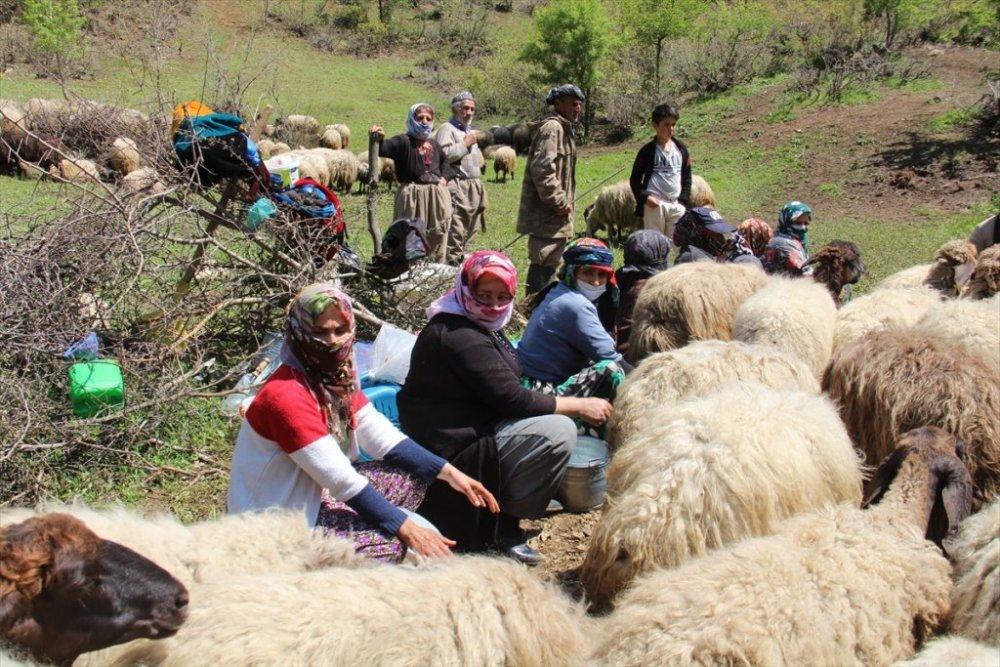 Şemdinli'de süt sağan kadınların zorlu yaşamı