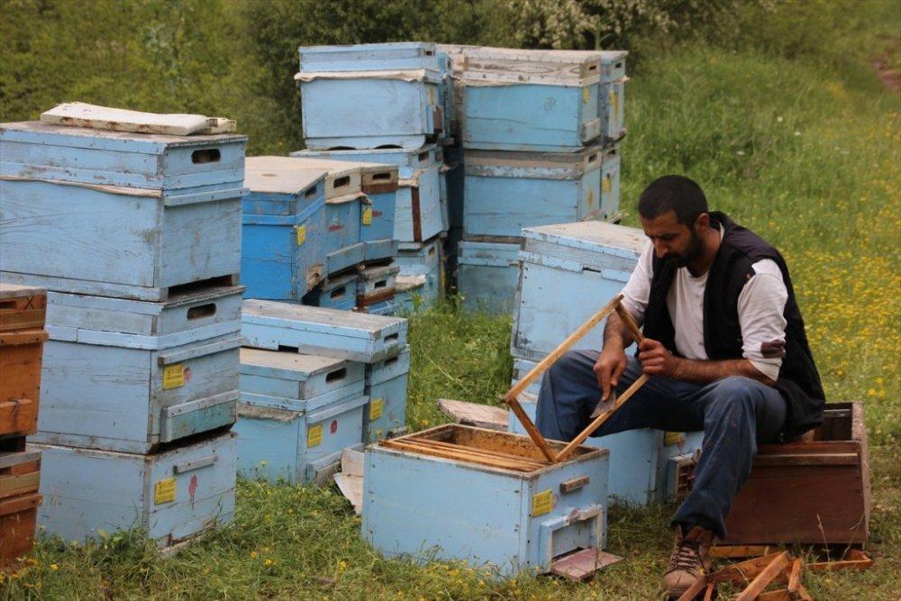 Hakkari'de binbir çeşit çiçekten bal üretimi başladı