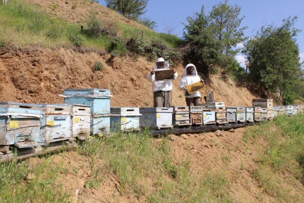 Arıcılar bu yıl daha fazla bal elde etmeyi hedefliyor