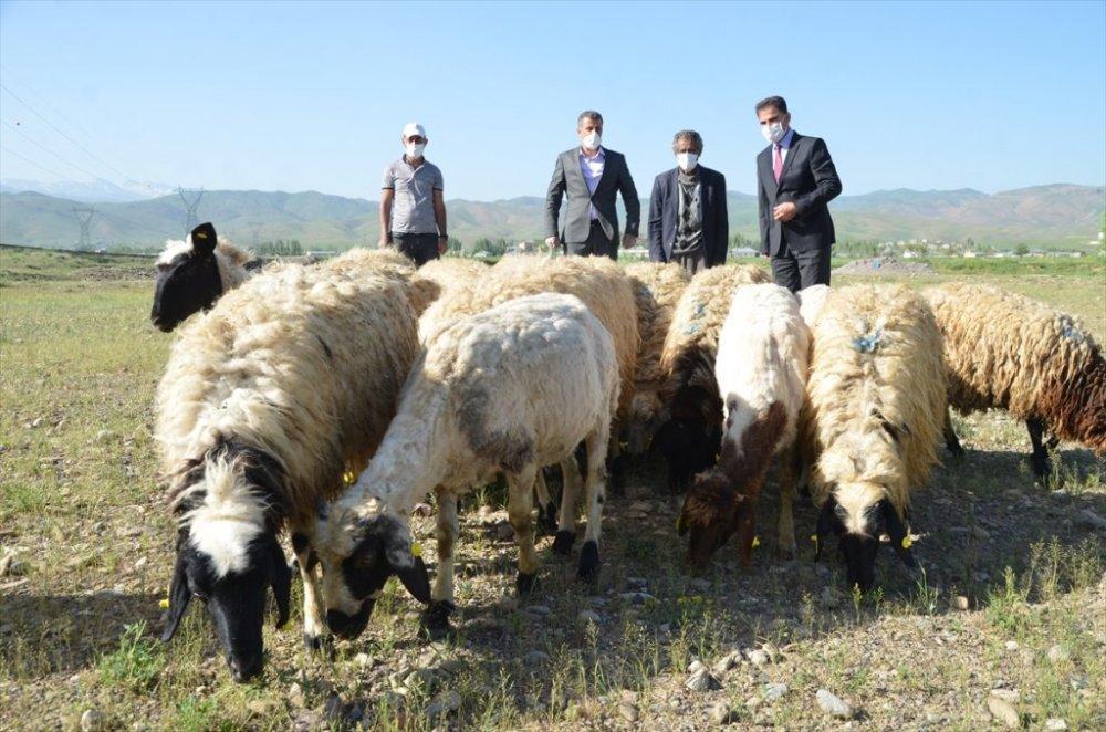 Bataklığa saplanan ineğinin başından ayrılmayan besiciye koyun desteği