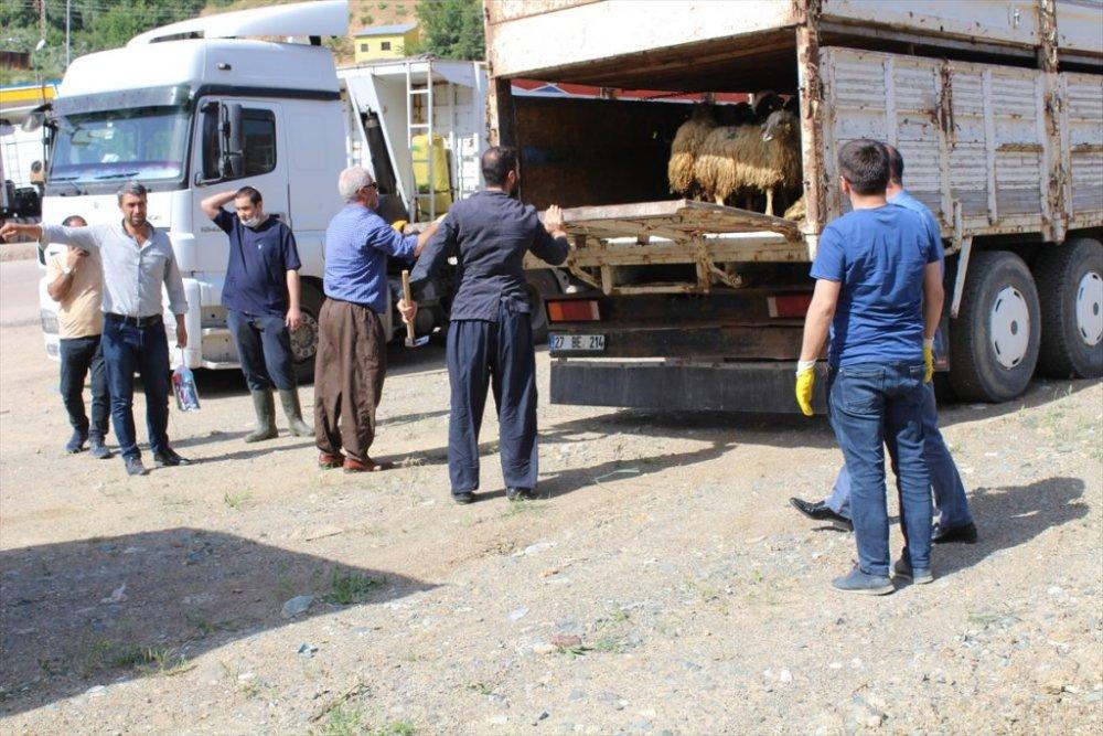 Şemdinli'de çiftçilere küçükbaş hayvan desteği