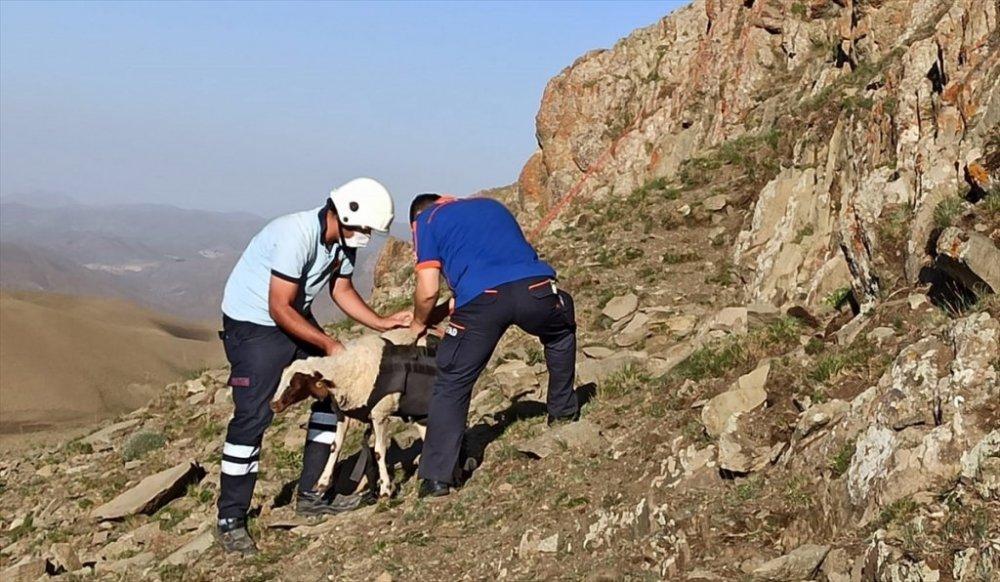 Kayalıklarda mahsur kalan koyunlar kurtarıldı