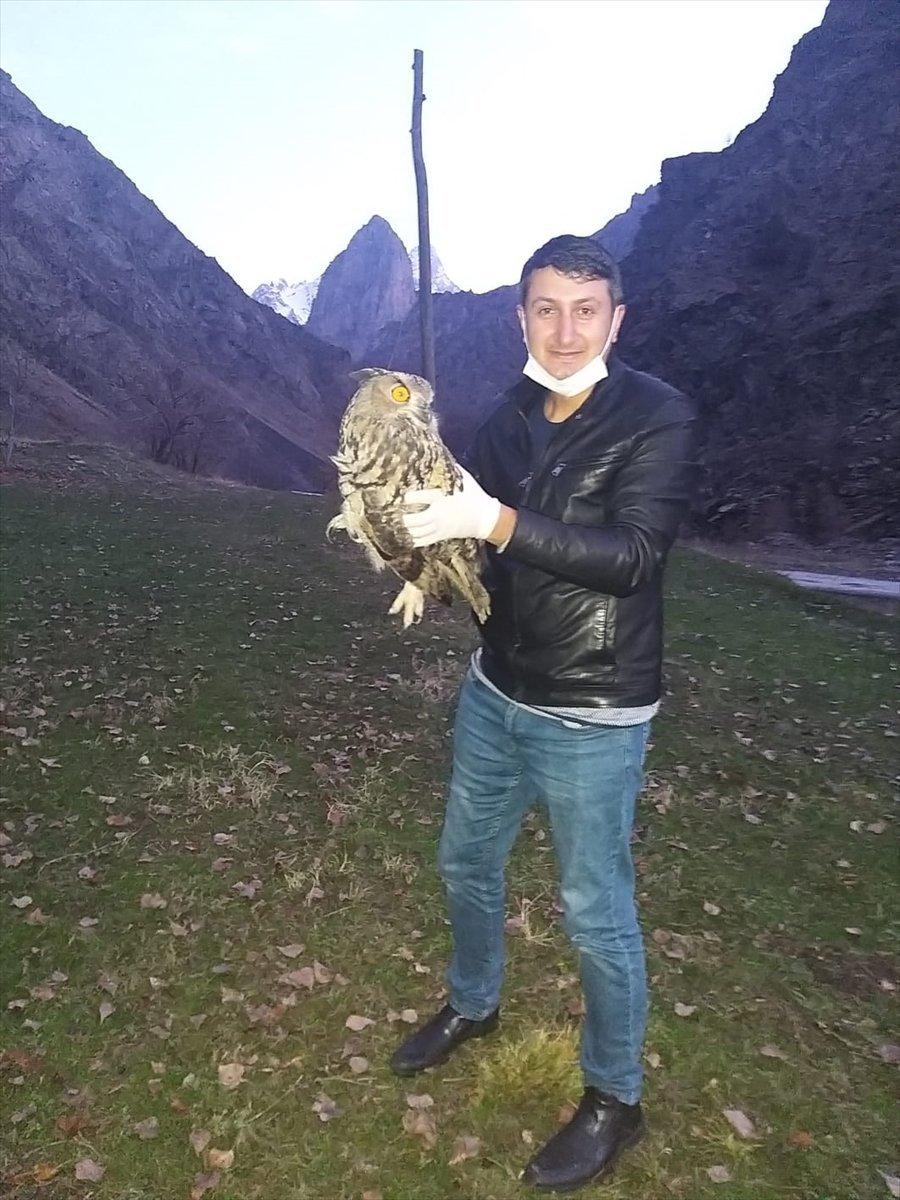 Hakkari'de yaralı bulunan puhu kuşu tedavi edildi