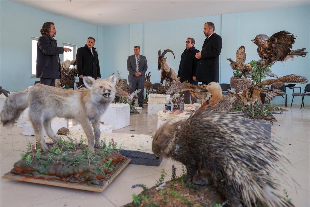 Van'da nesli koruma altındaki yaban hayvanları tahnit sanatıyla müzede tanıtılacak
