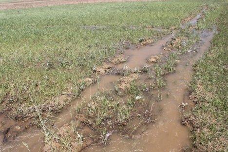 Ağrı'da Dolu Yağışı Tarım Arazilerine Zarar Verdi