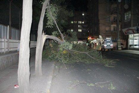 Diyarbakır'da Fırtına Ağaçları Devirdi