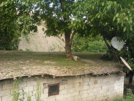 Evin İçinden Ceviz Ağacı Geçiyor
