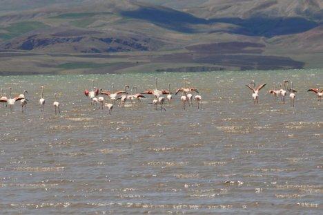 Flamingoların Görsel Şöleni