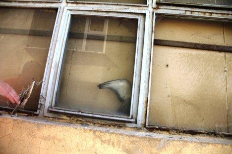Iğdır'da Güvercin Kurtarma Operasyonu