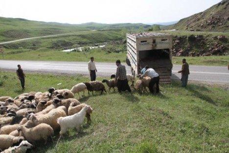 Kamyon Dereye Uçtu: 3 Kişi Yaralandı, 20 Koyun Telef Oldu