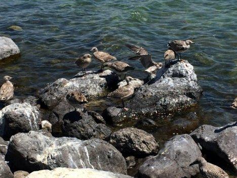 Onlar Adada Ölümü Bekliyor