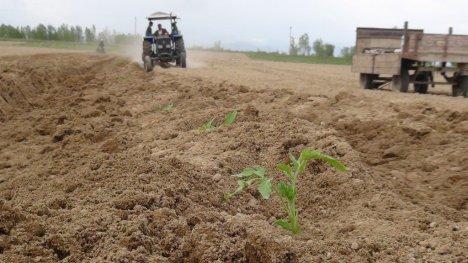 Sebze ekimleri geç başladı