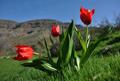 Şemdinli'de bahar güzelliği