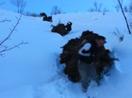 Dağlıca'da kızakla ot taşıma çilesi