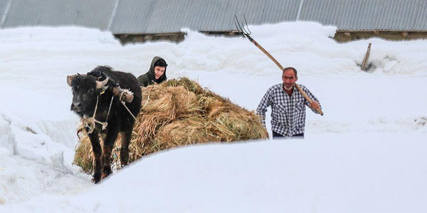 Yüksekova'da besiciler zor günler geçiriyor
